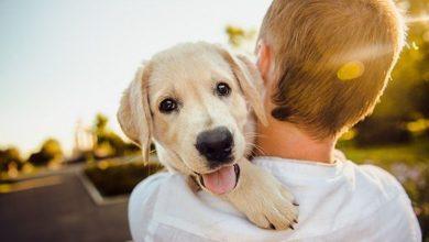Puppyhub.org