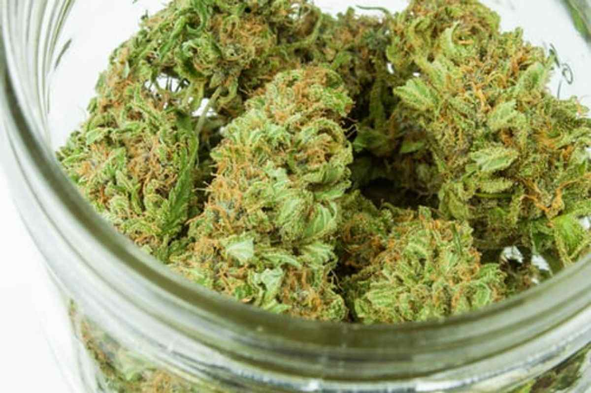 Viper Cookies Strain – How To Find the Best